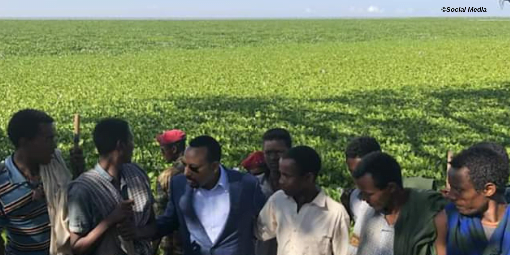 Analysis: Why Ethiopia is unable to control water hyacinth